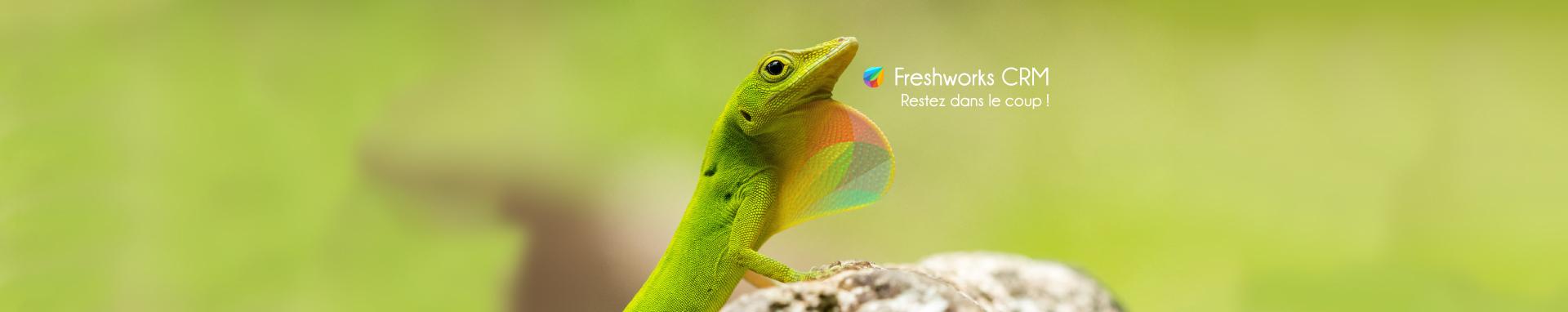 Logiciel Freshworks CRM, restez dans le coup !